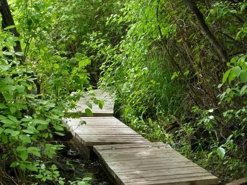 boardwalk wooden wetland
