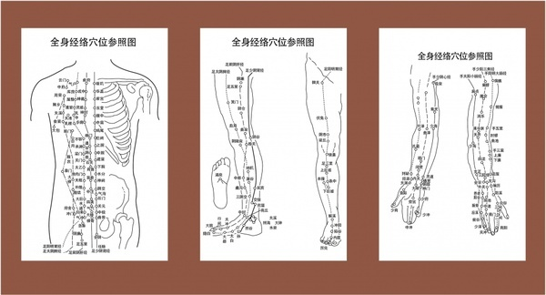 anatomy background sets traditional chinese design