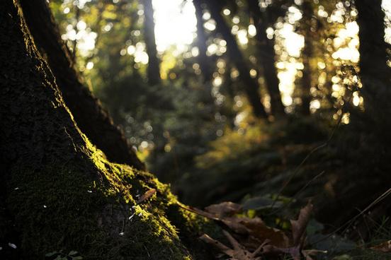 bokeh forest