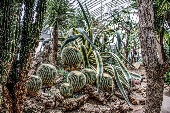 botanical cactus closeup environment flora fruit