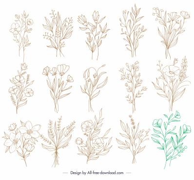 botanical icons classic handdrawn sketch