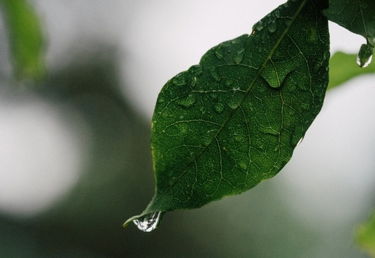 botany detail dew drop foliage grass growth leaf