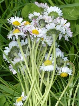 bouquet daisy flower