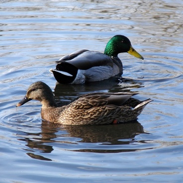 boy meets girl on the pond