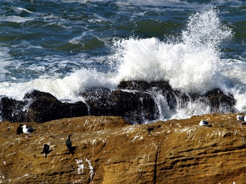 braking waves rocks cormorant