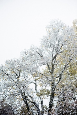 branch bright cold countryside foliage forest frost
