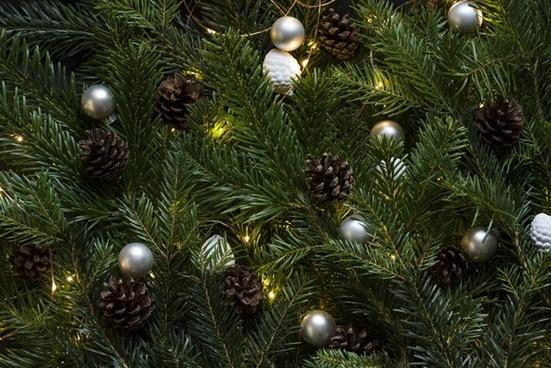 branch celebration christmas christmas tree color