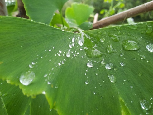 branch close up drop droplet leaf nature rain water