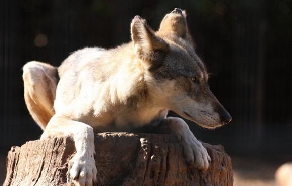 branch fox sitting