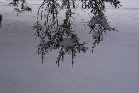 branch in winter