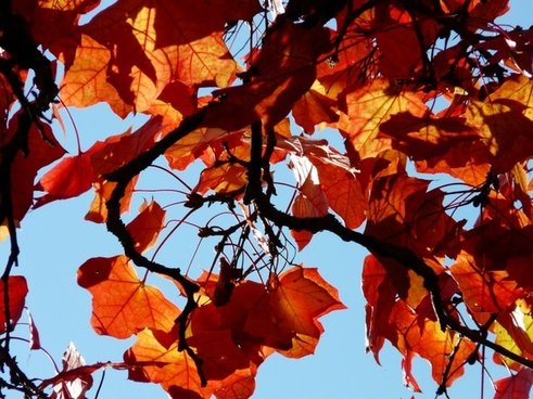 branch road leaves