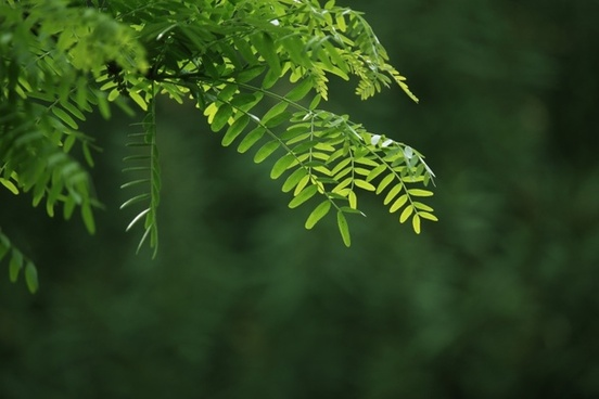 branch tree sheet