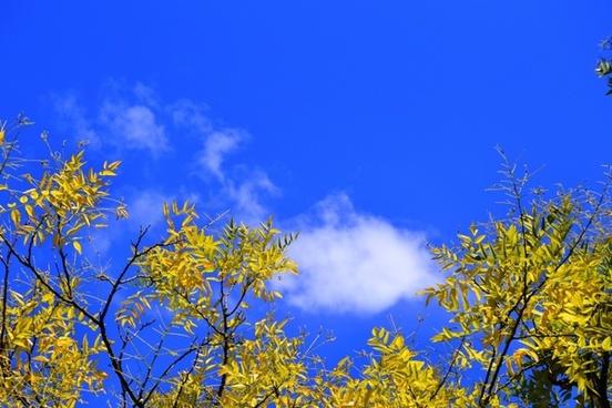 branch yellow tree