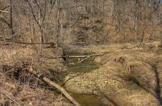 branches across the stream at maquoketa caves state park iowa