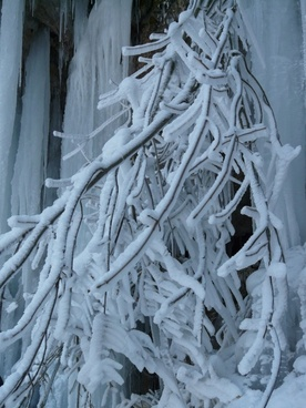 branches aesthetic hoarfrost