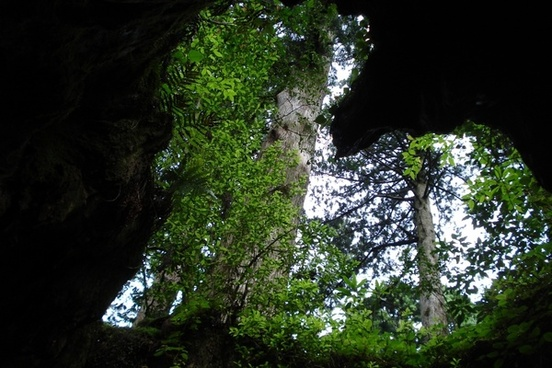 branches tree cave