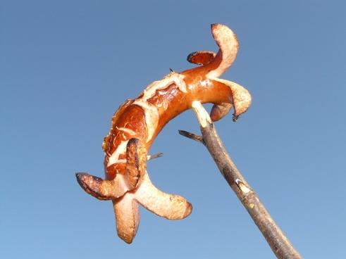 bratwurst sausage red