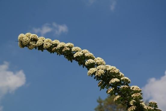 bride spiere engine flowers