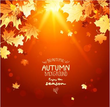 bright autumn leaf backgrounds vector set