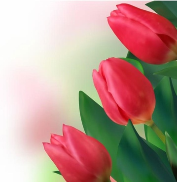 bright tulips 02 vector