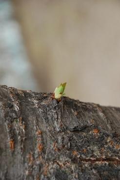 bud hope wood