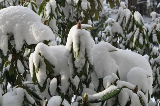 bud snow hood