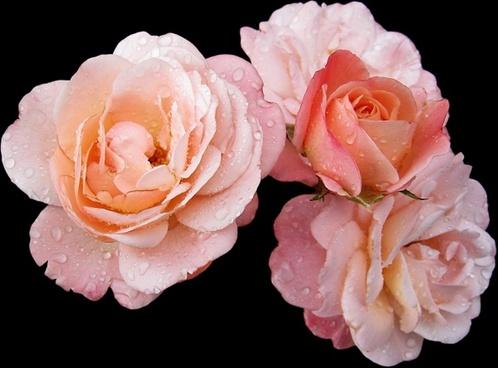 buga flowers bl�tenmeer