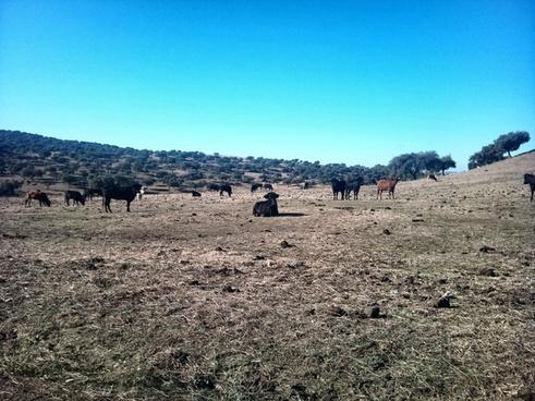 bulls field
