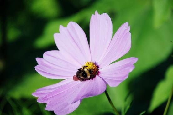 bumblebee bee flower