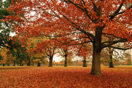 burghley in autumn