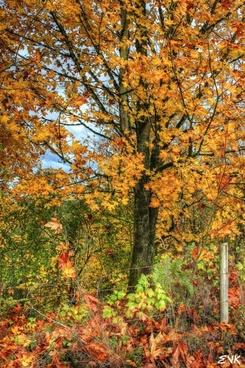 burst colors nature