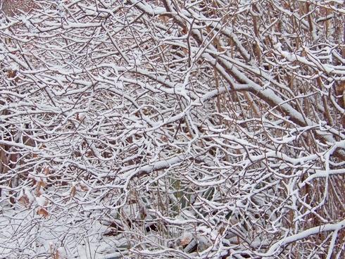 bush branches snow