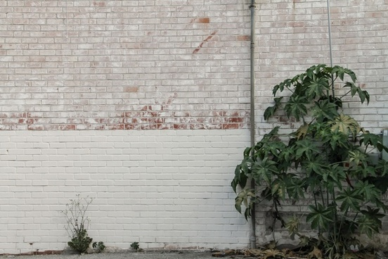 bush growing against white brick wall