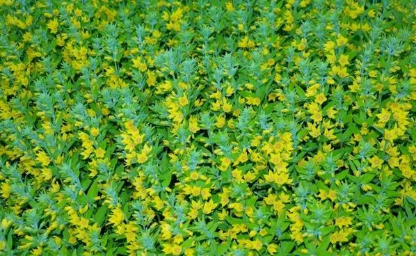 bush winter bushes bushes