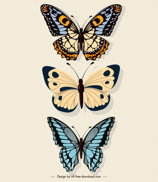 butterflies decor elements flat colored symmetrical design