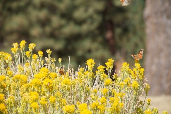 butterflies on wildflowers