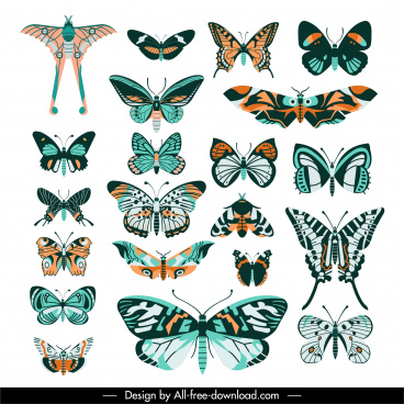 butterflies species collection colorful symmetric flat design