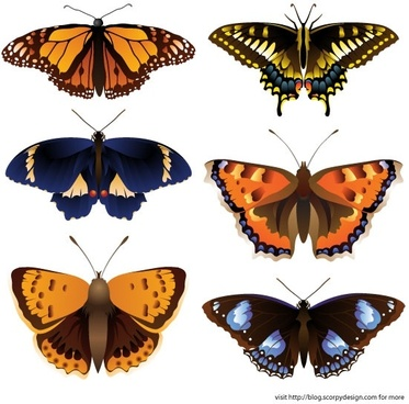 butterfly icons collection realistic colored style