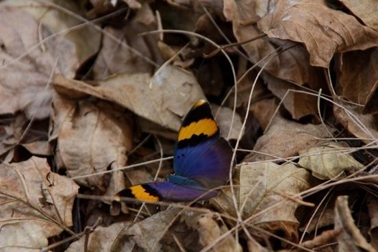 butterfly flower flora