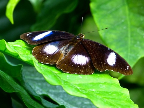 butterfly fly insect