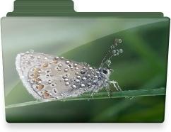 Butterfly folder