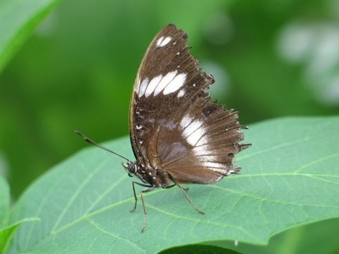 butterfly green background insect