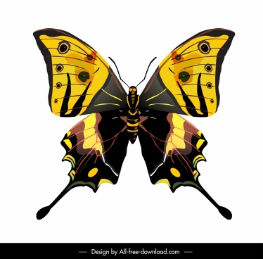 butterfly icon colorful modern flat symmetric sketch