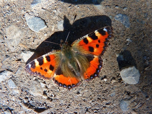 butterfly little fox colorful