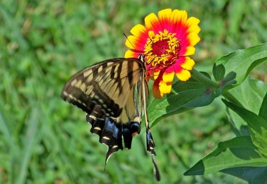 Flower And Butterfly Images Free Stock Photos Download 11287 Free