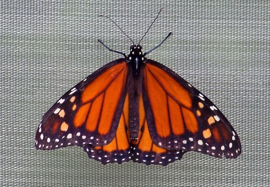 butterfly on screen