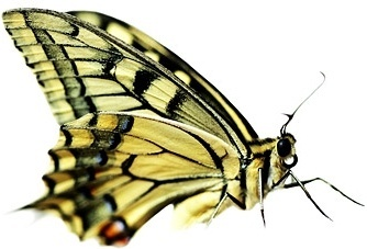 butterfly picture 2