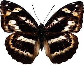 butterfly picture 3