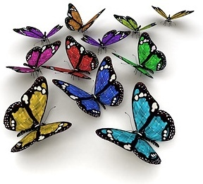 butterfly picture 7