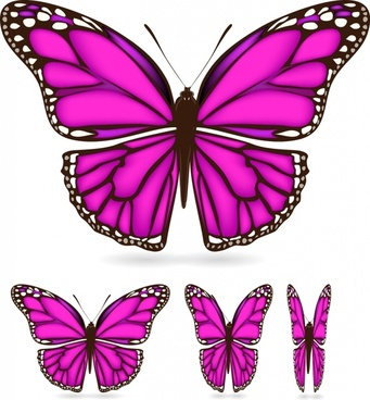 butterfly wings vector